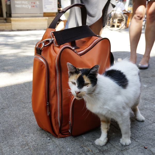 Nella-Bella-Istanbul-cat