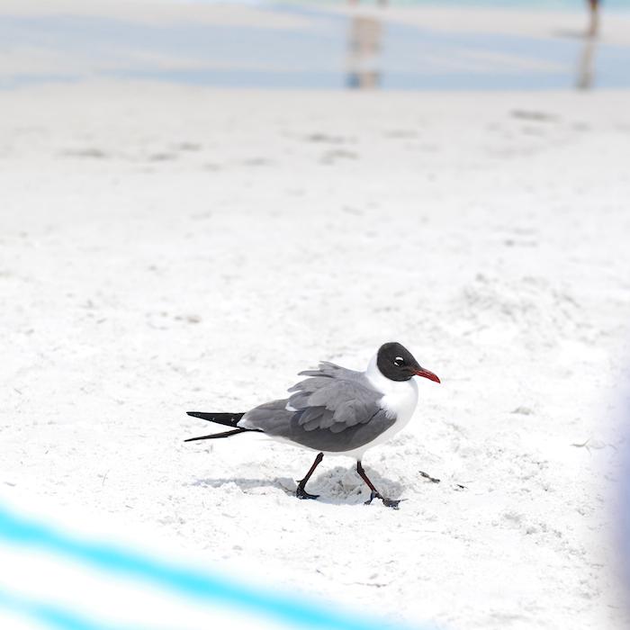 bird beach florida
