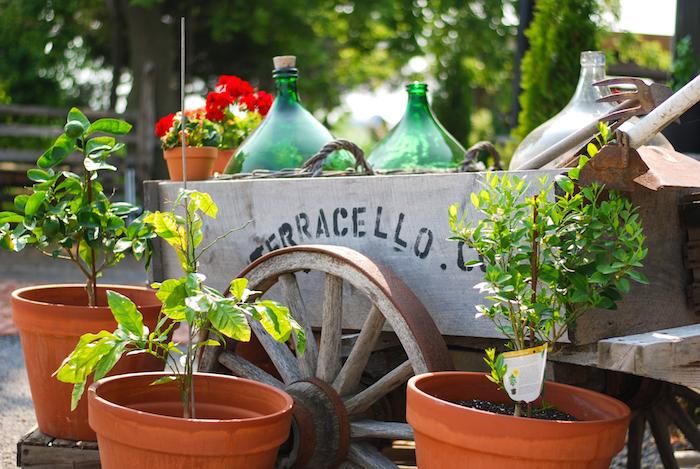 terracello winery