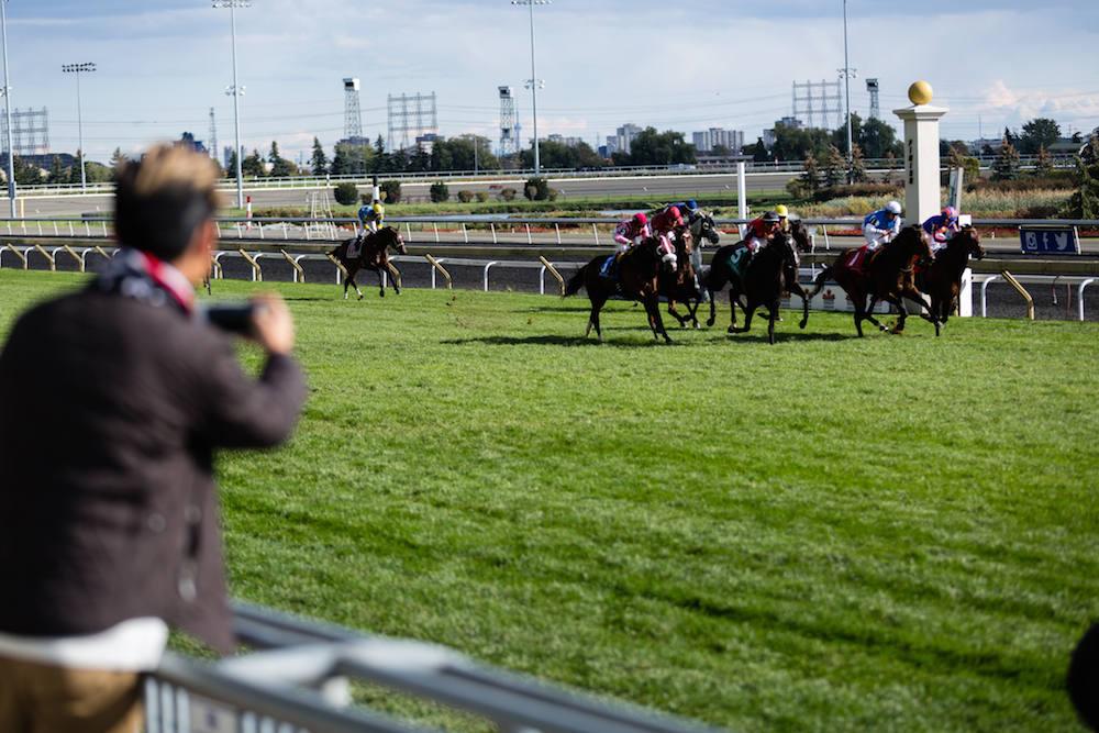 woodbine racetrack horse race style alexander liang 04