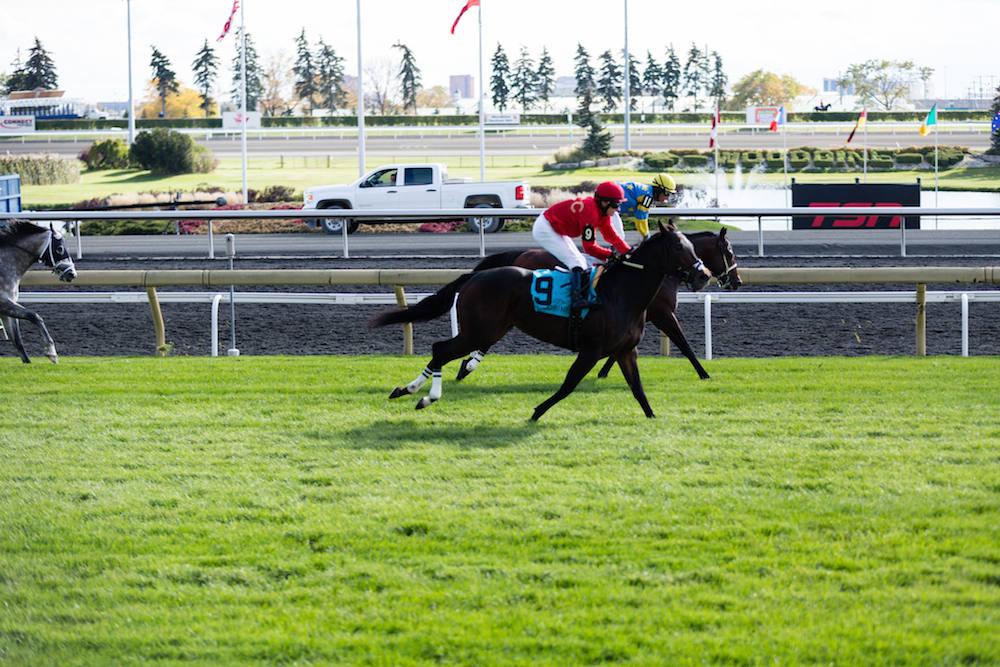 woodbine racetrack horse race style alexander liang 10