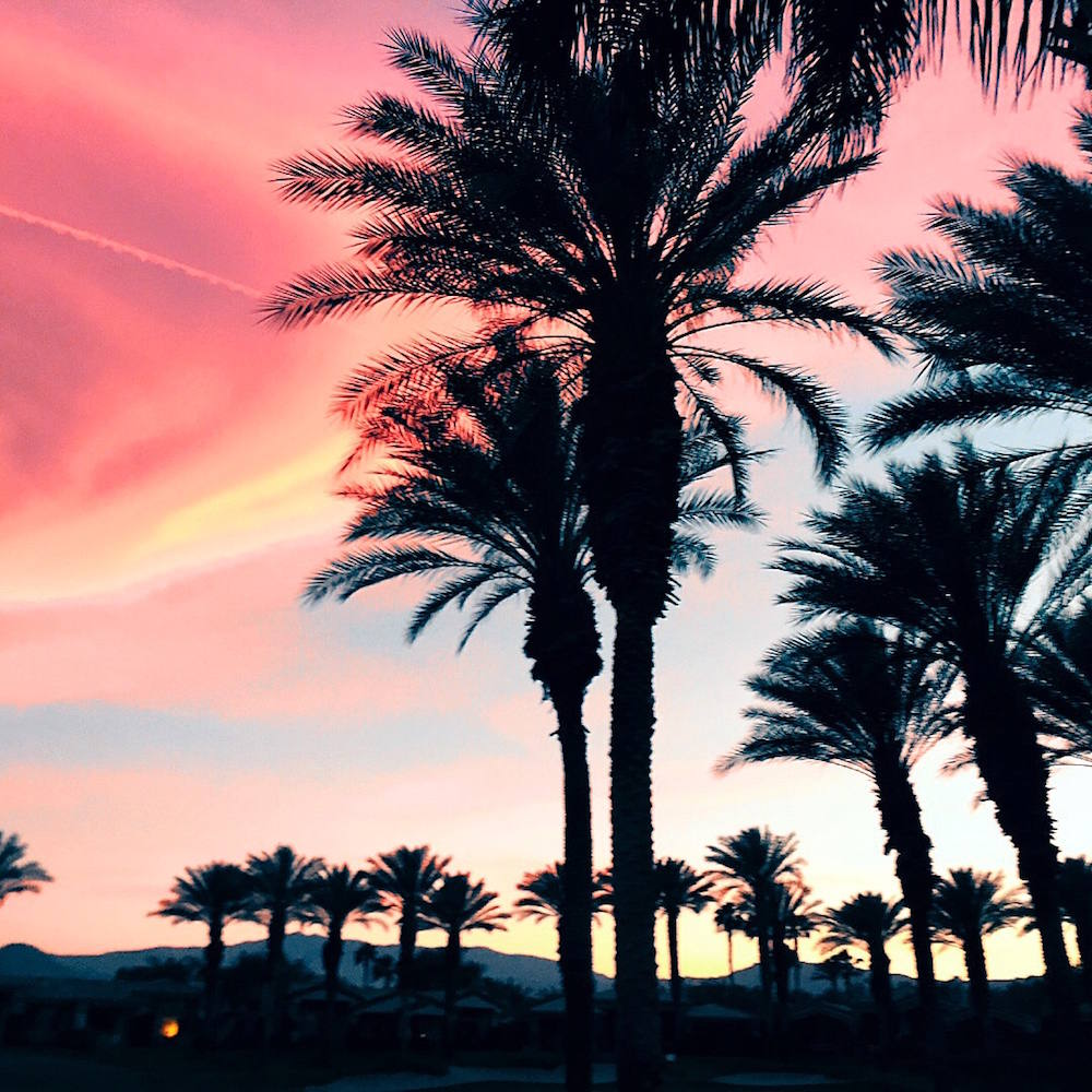 palm desert sunset palm trees