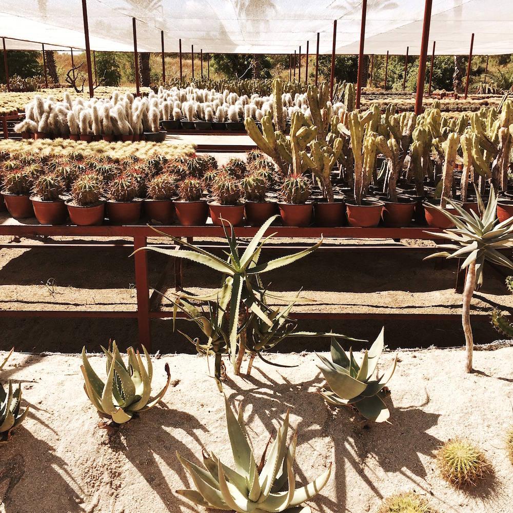 cabo cactus garden